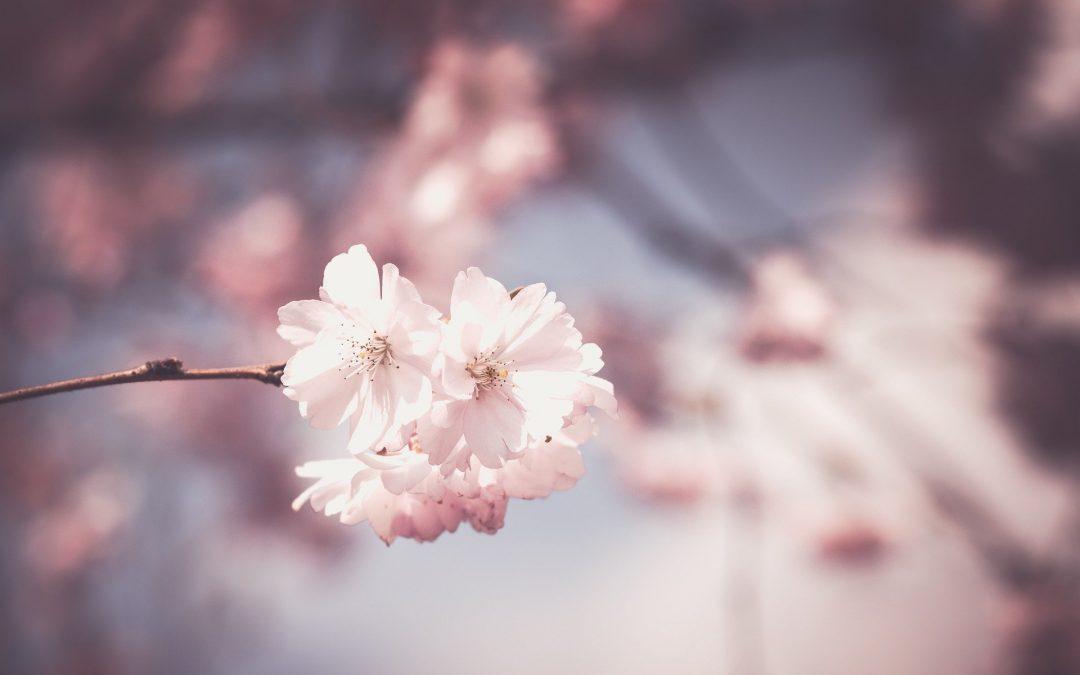 Les bienfaits de la massothérapie au printemps